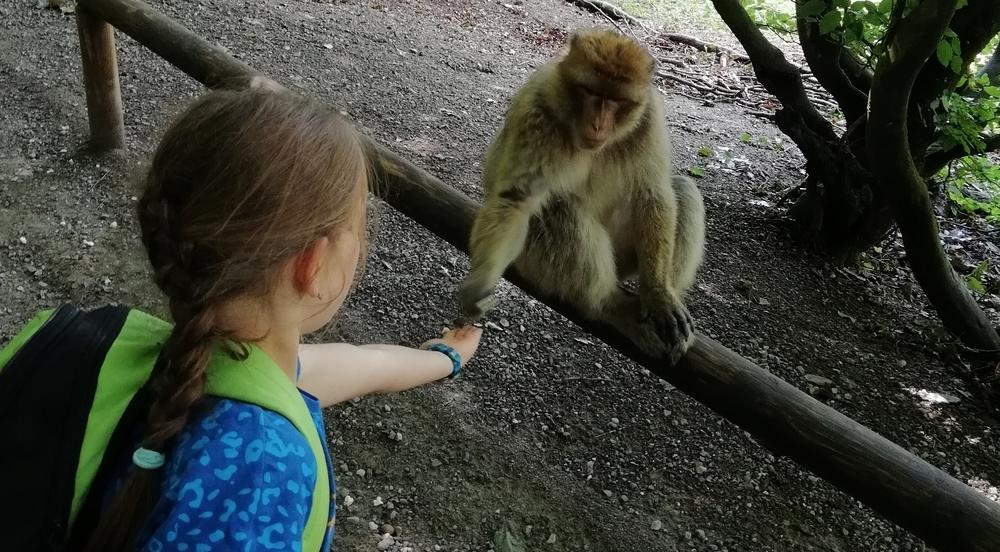 SuW: Jugendfahrt zum Affenberg in Salem